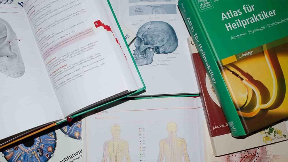 Ungewöhnlich Die Anatomie Und Physiologie Platz Galerie ...
