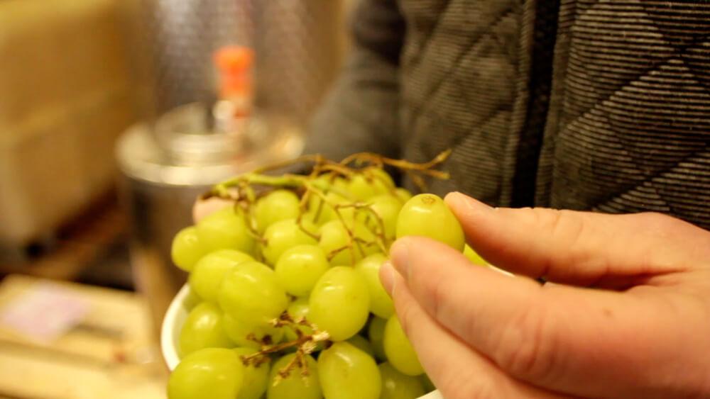 Wie aus der Traube Wein wird