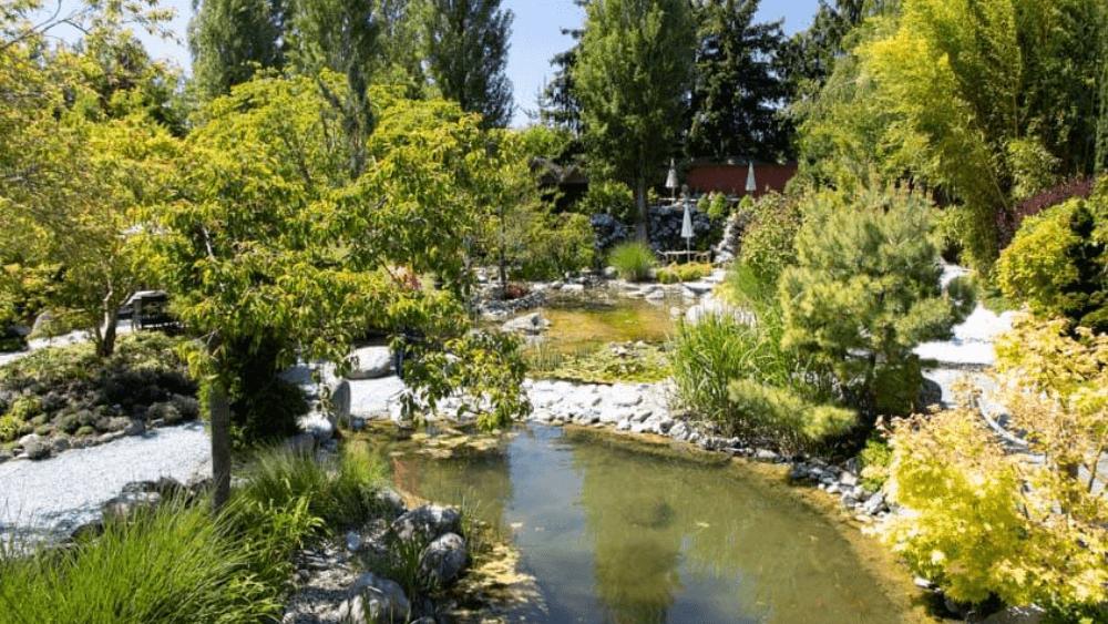 Der Lotos-Garten in seiner vollen Schönheit.